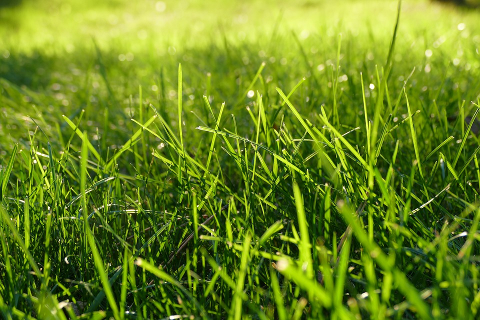 Moss control for your lawn